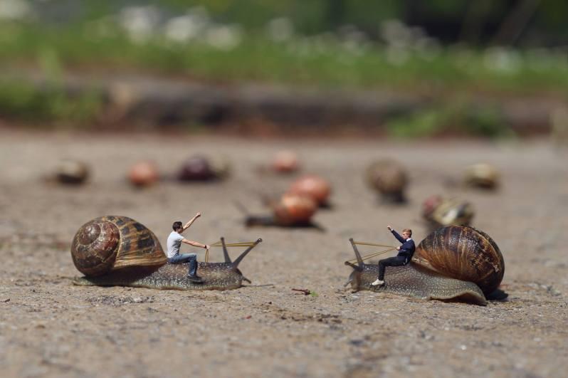 Les miniboys - combat d'escargots