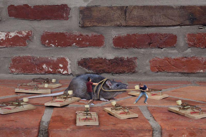 Les miniboys - piege a rat