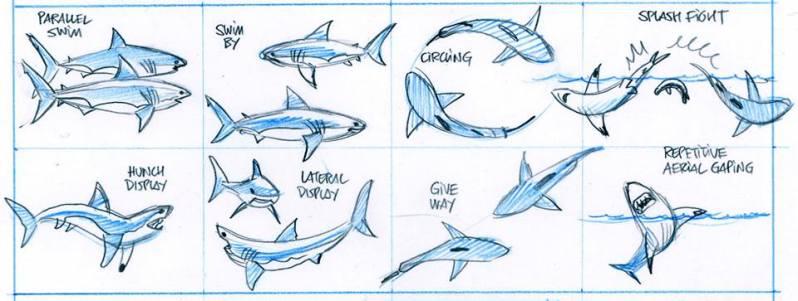 Petite Bedetheque des savoirs - Seret - Julien Sole - Les Requins - Recherches