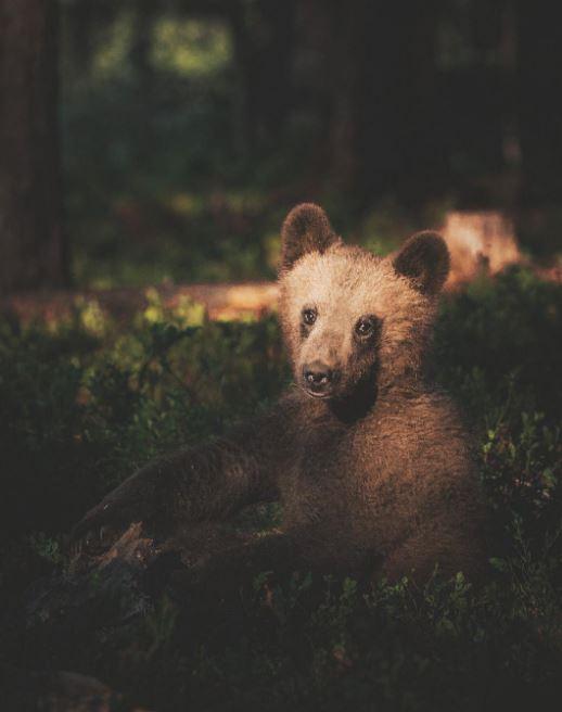 Konsta Punkka - Wildlife photography (12)