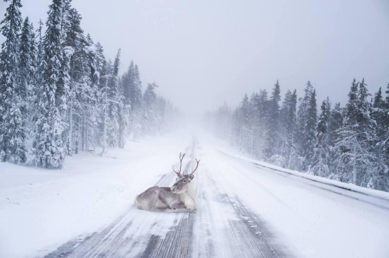 Konsta Punkka - Wildlife photography (4)