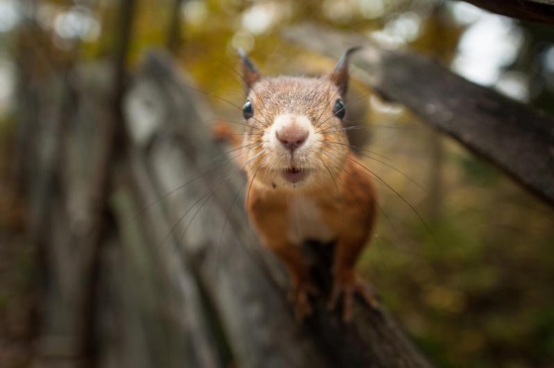 Konsta Punkka - Wildlife photography (9)