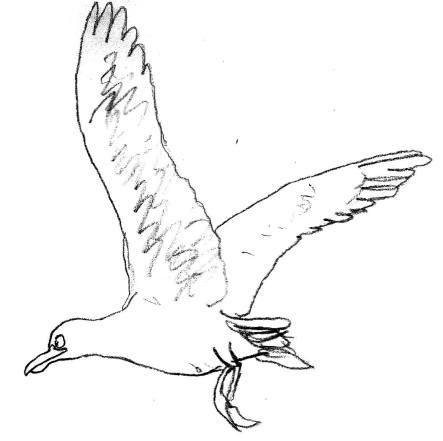 le-roi-de-la-mer-sabri-kasbi-mouette