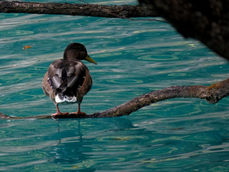 voyage-vacances-croatie-2016-lacs-de-plitvice-141