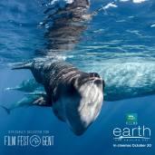 Un nouveau jour sur terre - documentaire BBC - baleine