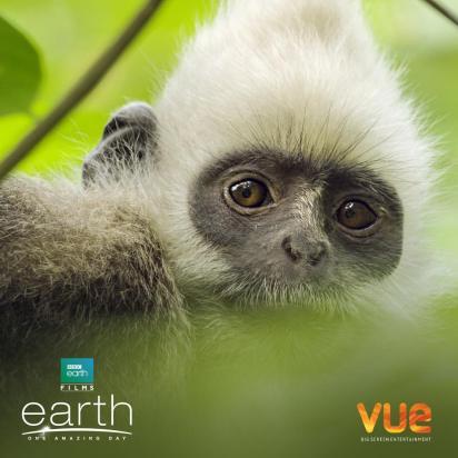 Un nouveau jour sur terre - documentaire BBC - singe$